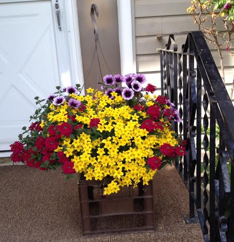 front step flowers